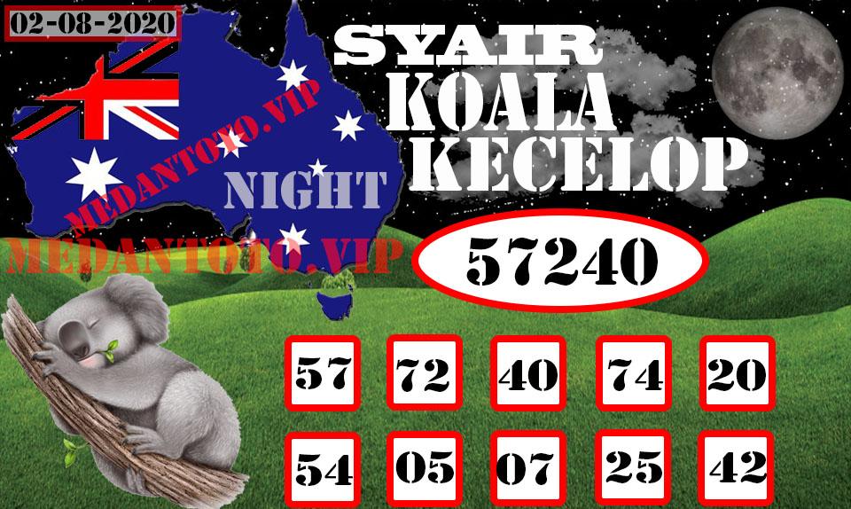 koala%2002.jpg