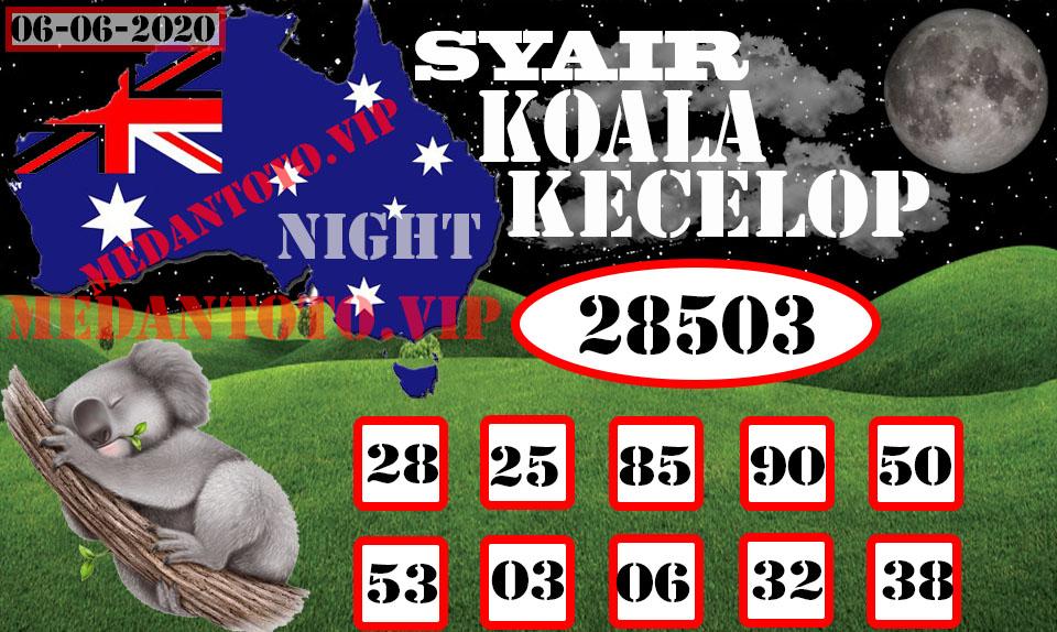 SYAIR KOALA KECELOP 06 .jpg (960×574)