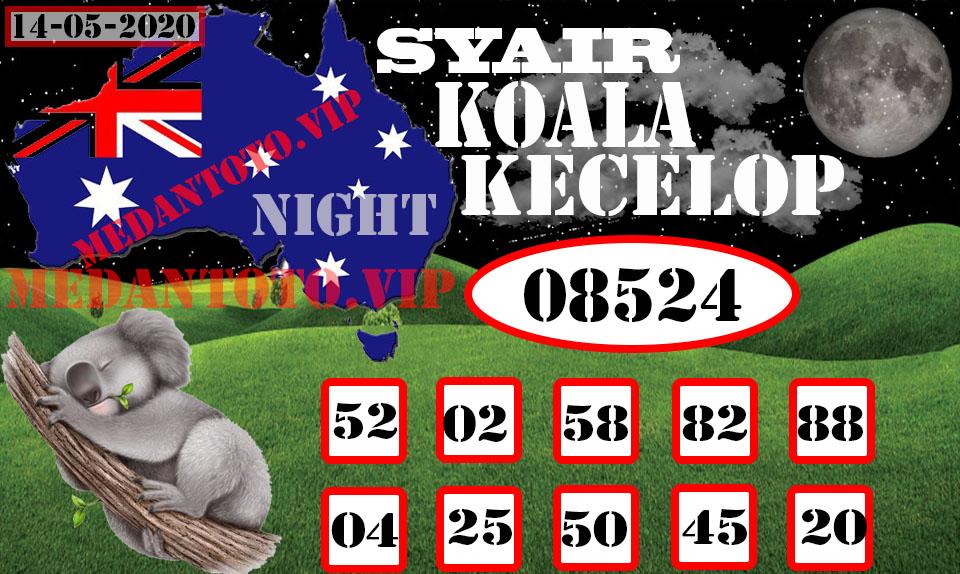 SYAIR KOALA KECELOP 14 .jpg (960×574)